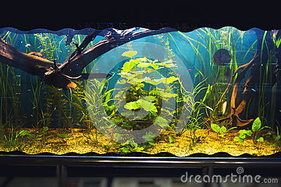 Aquarium with vegetation