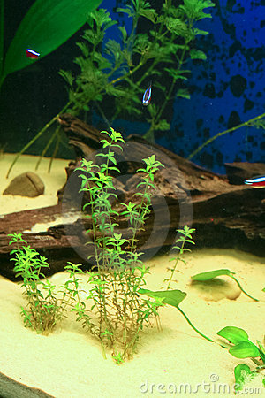 Free Aquarium With Some Tropical Fisches Stock Photos - 18565663