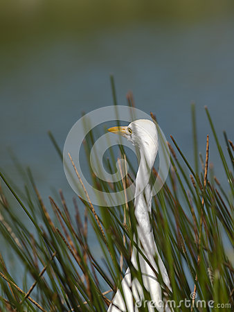Aquatic bird surrounded