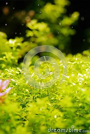 Aquatic green garden