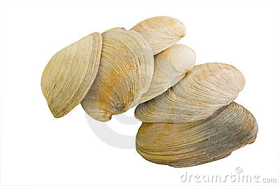 Aquatic Mollusk Shells