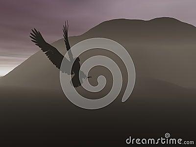 Aquila di notte