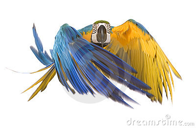 Ara明亮的飞行鹦鹉