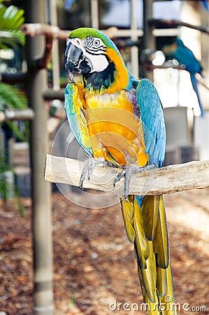 Ara Parrot on a stick