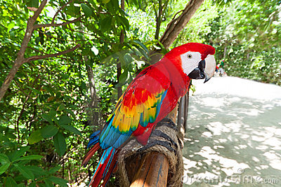 Ara parrot in the wildlife park