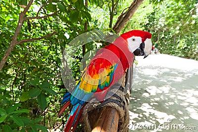 Ara parrot in the wildlife park