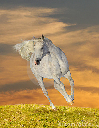 Free Arab Horse In Sunset Royalty Free Stock Photo - 16034025