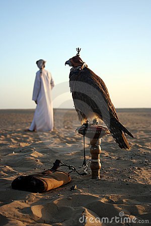 Free Arabian Falcon Stock Images - 429704