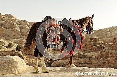 Arabian horse in Petra