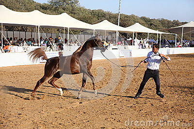 Arabian horse show and championship Editorial Photography