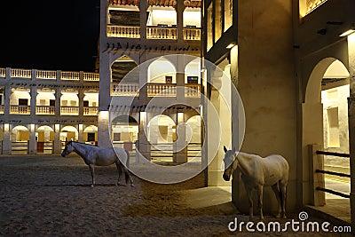 Arabian horses in Doha Qatar