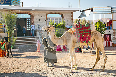 Arabic man with camel  in Egypt Editorial Image