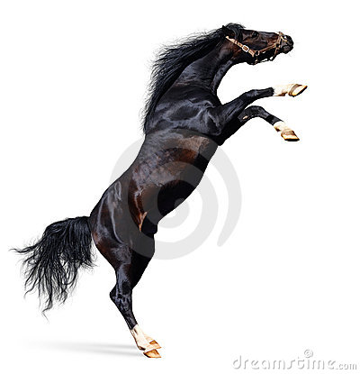 Arabische Pferdenrückseiten