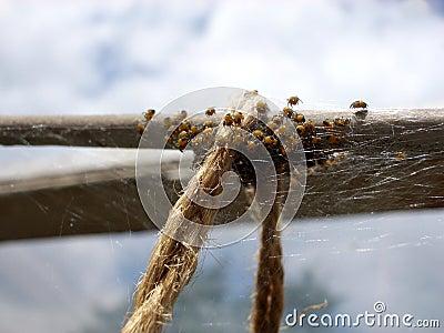 Aranhas minúsculas 3