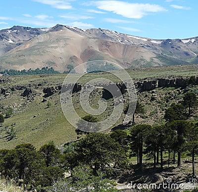 Araucaria forest (Patagonia)