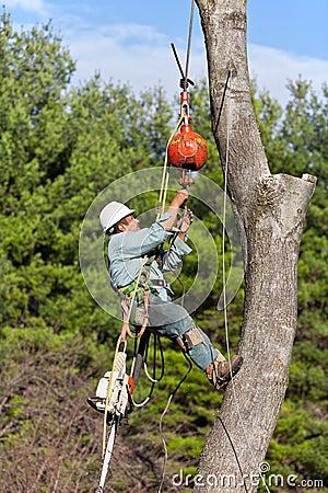 Arbeider die een kabel verbindt met boomboomstam