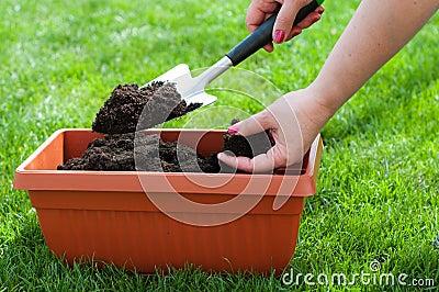 Arbeta i trädgården