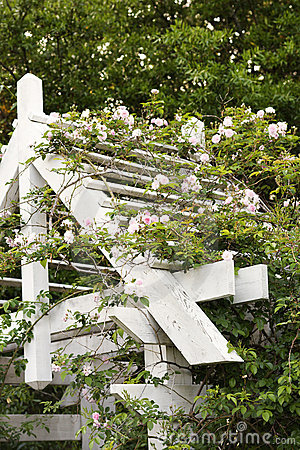 Arbor with blooming vine.