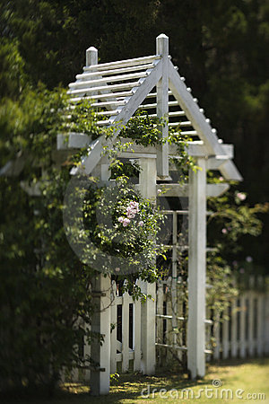 Arbor with rose bushes