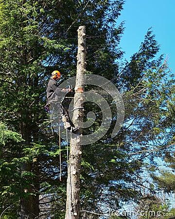 Free Arborist Sawing Tree Stock Photo - 91183000