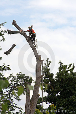 Arborist sequence - tree cutting