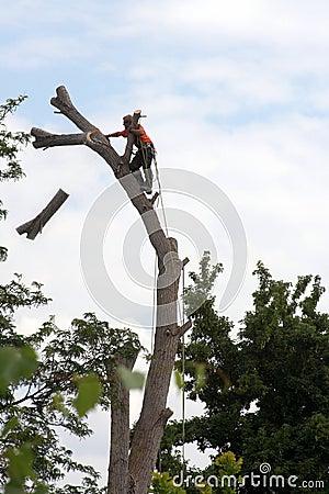 Arborist sequence - tree cutting