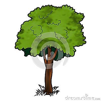Arbre feuilles caduques images stock image 2097944 - Arbres a feuilles caduques ...