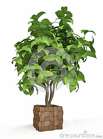 Arbre d coratif de plante d 39 int rieur photo stock image for Plante arbre interieur