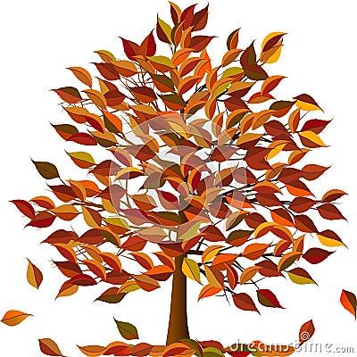 Arbre d 39 automne photo libre de droits image 20802395 - Arbre d automne dessin ...