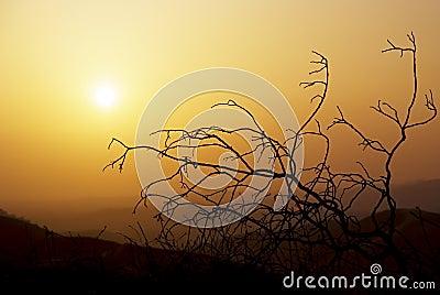 Arbre de coucher du soleil