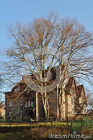 arbre devant la vieille maison photographie stock image 9672712. Black Bedroom Furniture Sets. Home Design Ideas