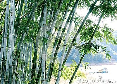 Arbre en bambou vert