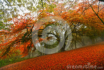 Arbre forestier de conte de fées d automne