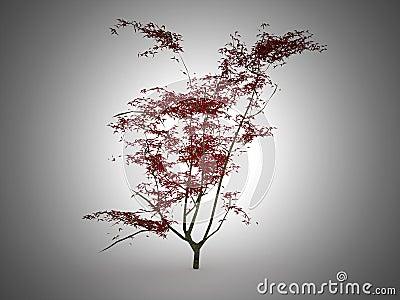 arbre japonais rouge de feuille photographie stock image 31966332. Black Bedroom Furniture Sets. Home Design Ideas