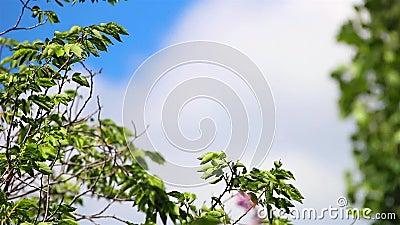 Arbre se déplaçant avec le vent au cours de la journée banque de vidéos