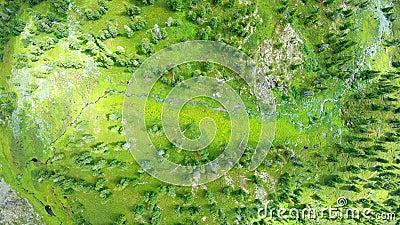 Arbres et herbes verdoyantes d'un point de vue ornithologique banque de vidéos