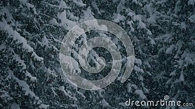 Arbres et neige lentement en baisse banque de vidéos