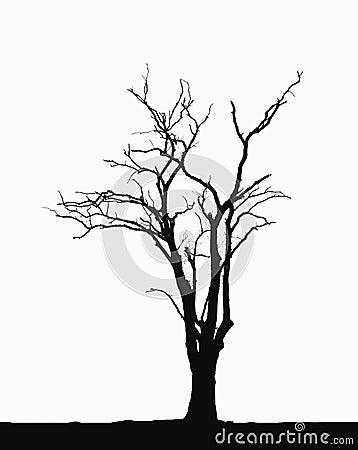 Arbres sans feuilles de silhouette photographie stock - Arbres sans feuilles ...