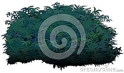 Arbuste