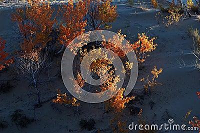 Arbusto in deserto