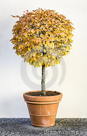 Arbusto pequeno