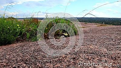 Arbustos nativos soplan con viento almacen de metraje de vídeo