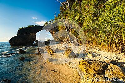 Arbustos naturales de la alta marea de la playa de la señal del puente