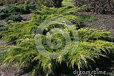 Arbustos ornamentales for Arbustos decorativos jardin