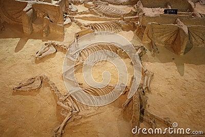 Archeologisch museum Redactionele Foto