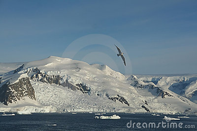 Arctic gull, mountains & glaciers
