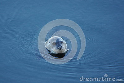 Arctic seal 3
