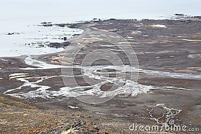 Arctic tundra - Spitsbergen