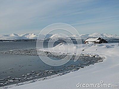Arctic Winter Wonderland