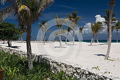 Areia e palmas brancas do oceano de México